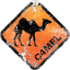 The Camel Empire