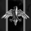 Geschwader des schwarzen Falken