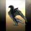 Blackbird Enterprises