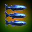 3 Smail Fish