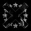 X PARADOX